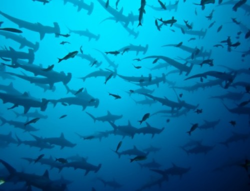 The Nomad America Guide to Costa Ricas Best Scuba Diving Sites